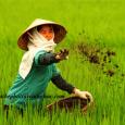 bón phân hữu cơ cho cây trồng