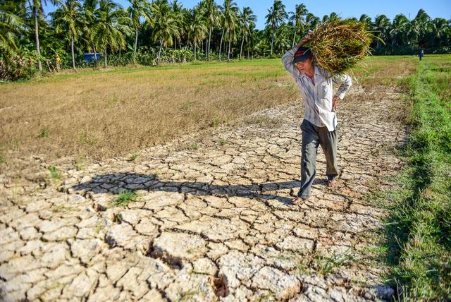 Ảnh hưởng đến nông nghiệp