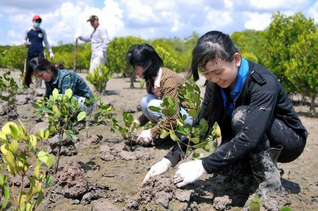 phục hồi rừng