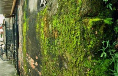 cách diệt rong rêu trên nền xi măng