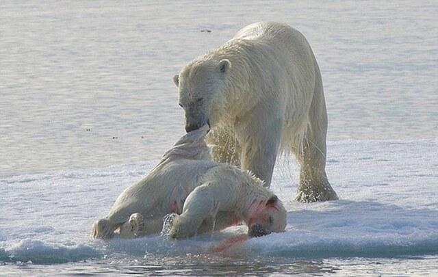 Tác động đến cực Nam và cực Bắc