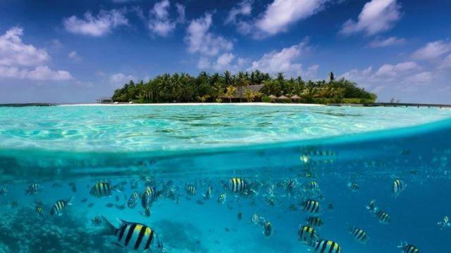 Tác động đến biển và đại dương